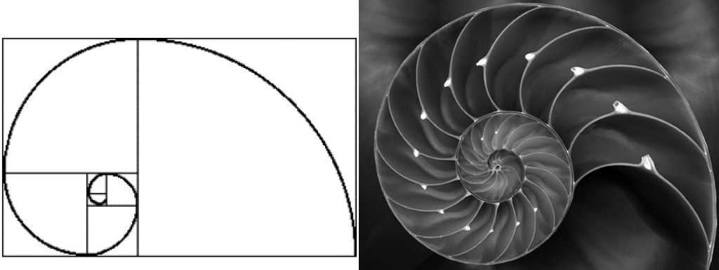 NOTA 1 nautilo - spirale