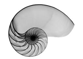 nautilus-8